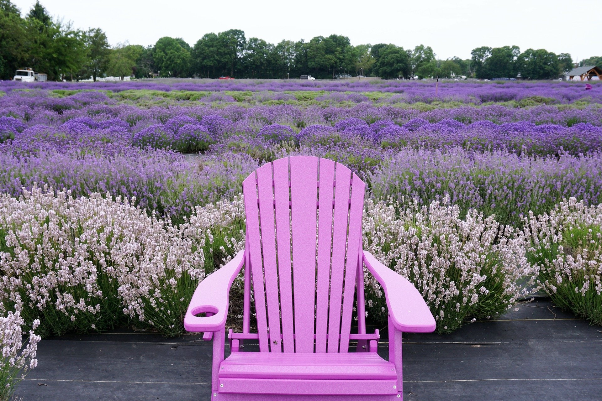 Lavender by The Bay Chair